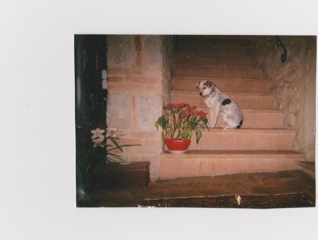 001-foto3-cane sulla scala
